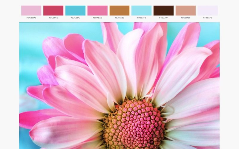 How to Easily Get Color Palette from an Image